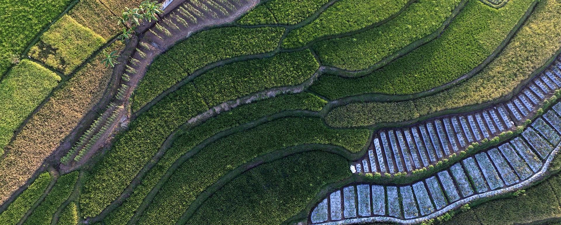 Аграрний сектор